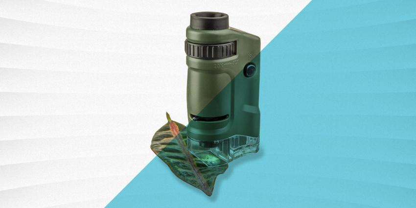 these top-rated microscopes are your best bet for students and kids of all ages