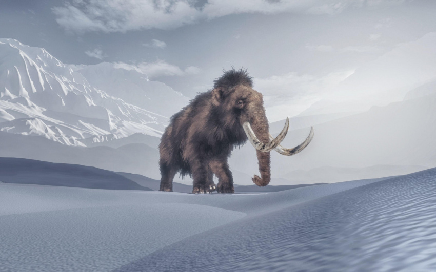 woolly mammoths could walk the earth again if crispr startup succeeds