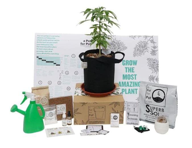 gear, news, commerce, wh-1000xm3, irl, sony, giftguide20, kindle paperwhite, thebuyersguide, breville, holiday20, a pot for pot, aerogarden, vmholiday2020, hgg2020, amazon